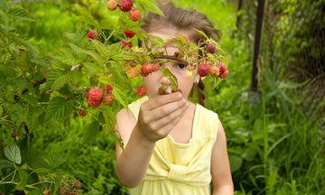 #RaspberryCakeDay - Γιορτάστε αυτή τη μέρα με ένα άκρως καλοκαιρινό γλυκάκι