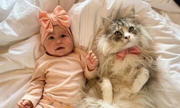 Γνωρίστε την Μilomute -Η γάτα που έχει πάνω από 30k followers στο Instagram