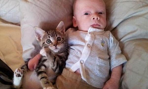 Μωράκια και γάτες – Μία σχέση… λατρείας (vid)