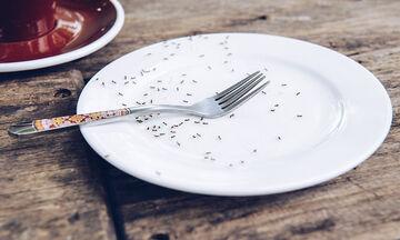 Μυρμήγκια στην κουζίνα; Εύκολοι τρόποι να απαλλαγείτε μια και καλή