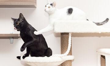 Πώς θα φτιάξετε το ωραιότερο σπιτάκι για το γατάκι σας