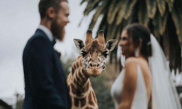 Αυτές είναι οι καλύτερες φωτογραφίες γάμου για το 2020 (pics)