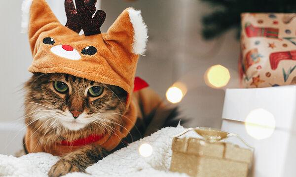 Γάτες «τραγουδούν» χριστουγεννιάτικα και γίνονται viral