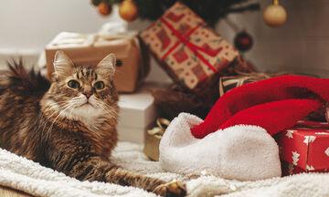 Ξεκαρδιστικό βίντεο με γάτες που τα βάζουν με το χριστουγεννιάτικο δέντρο