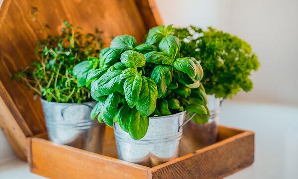 Εννέα αρωματικά φυτά που μπορείτε να έχετε στην κουζίνα σας (vid)