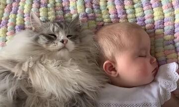 Γάτα προστατεύει μωρό ενώ κοιμάται (vid)