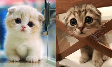 Αξιολάτρευτες γάτες σε απίθανα στιγμιότυπα (vid)