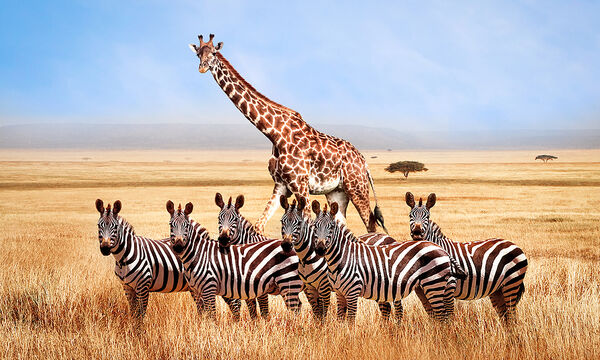 Ζώα της Αφρικής: Διασκεδαστικές χρωμοσελίδες για παιδιά (pics)