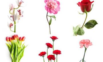 Διάλεξε ένα λουλούδι και μάθε τι φανερώνει για τον χαρακτήρα σου!