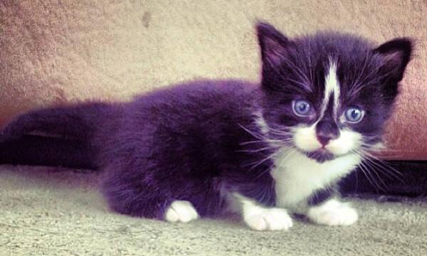 Τα γατάκια του Instagram που θα σας κάνουν να υιοθετήσετε ένα ASAP (pics)