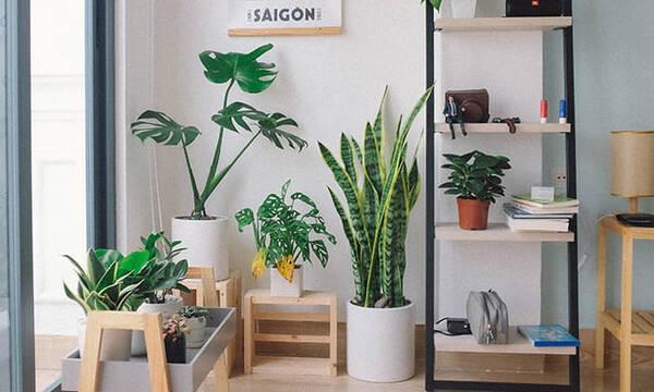 Πώς θα βελτιώσουμε την ατμόσφαιρα στο σπίτι με φυσικό τρόπο