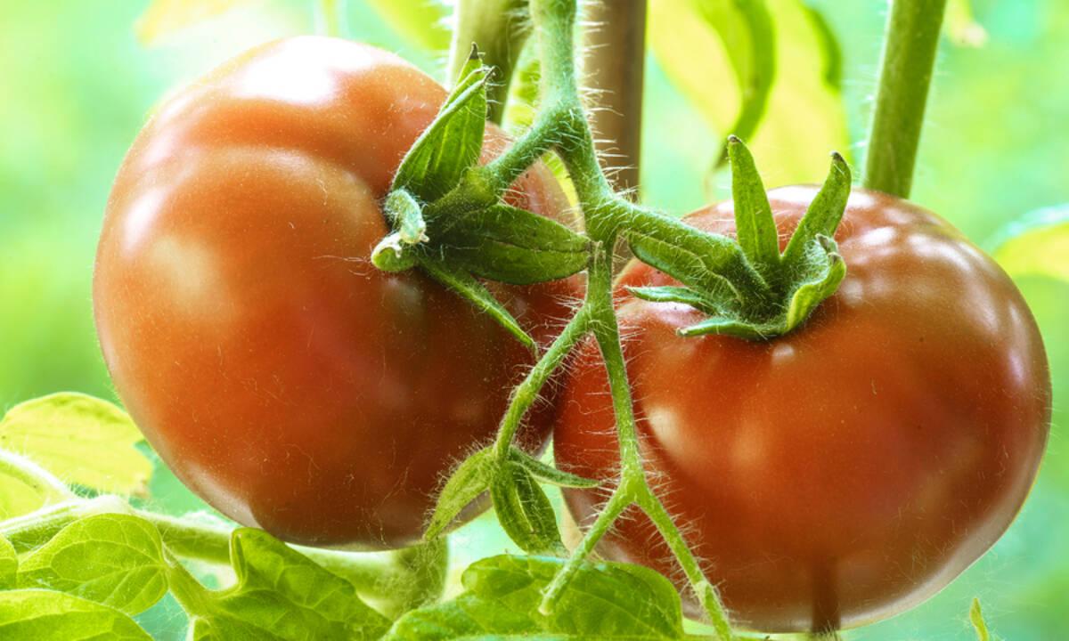 Ντομάτα: Θερμίδες + 7 σημαντικά οφέλη για την υγεία (εικόνες)