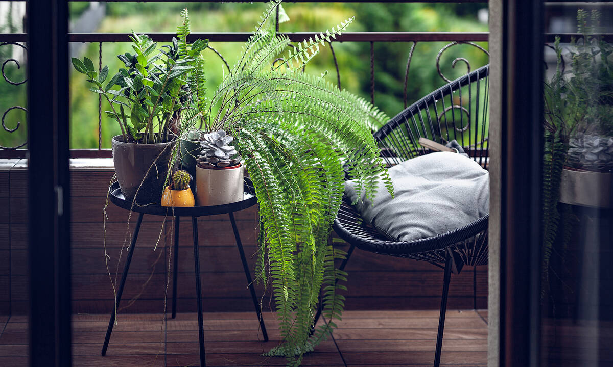 Τιps για μαμάδες: Πέντε ανθεκτικά φυτά για το μπαλκόνι σας το καλοκαίρι