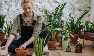 Τα φυτά που διώχνουν μακριά τα κουνούπια: Φύτεψέ τα τώρα στο μπαλκόνι (photos)