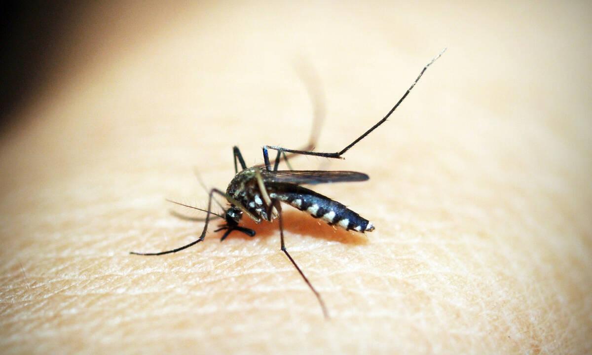 Πέντε απλά tips για να κρατήσετε τα κουνούπια μακριά αυτό το καλοκαίρι