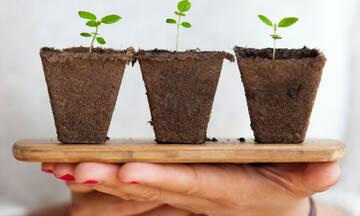 Τα μεγαλύτερα λάθη που κάνεις στην κηπουρική και δεν μπορείς μπορείς να φυτέψεις τίποτα