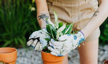4 λουλούδια για να φυτέψεις εύκολα στο μπαλκόνι σου και να πιάσουν αμέσως