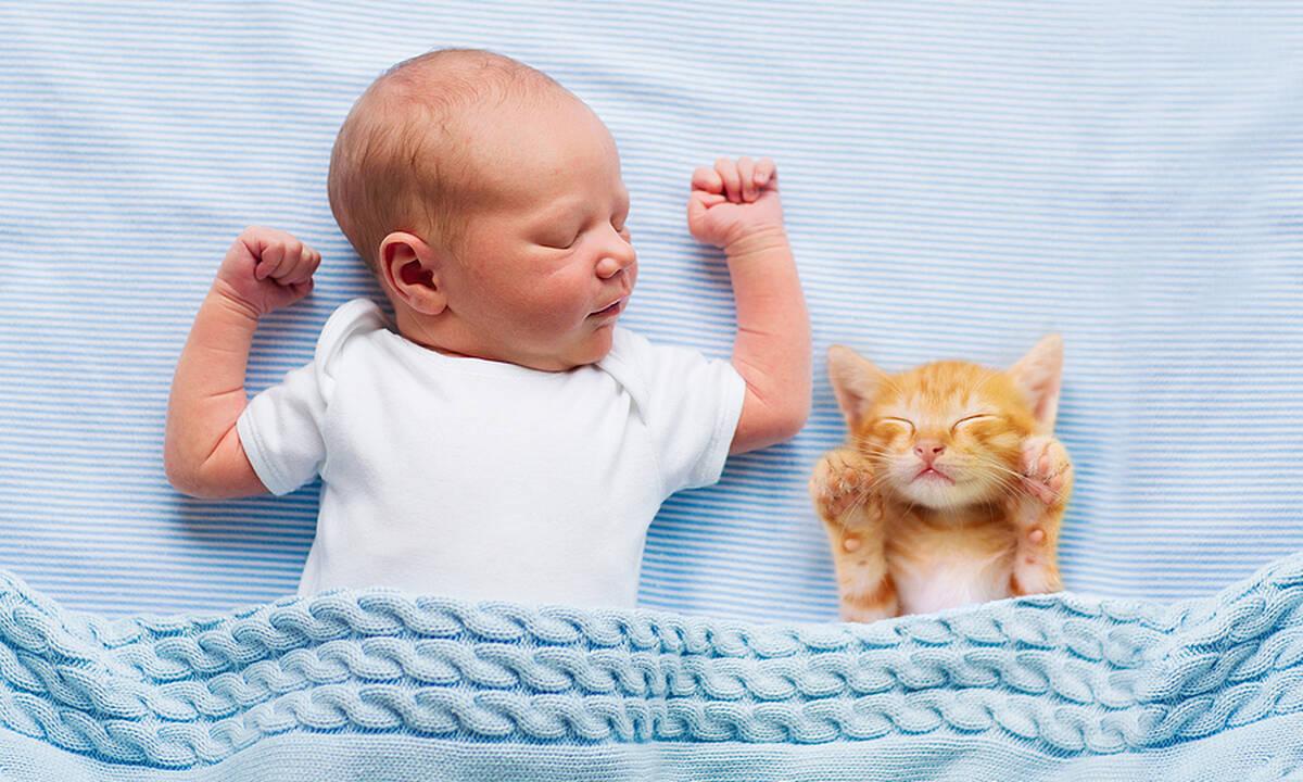Μωράκι αντιγράφει τη γάτα του – Το βίντεο που έγινε viral στο TikTok